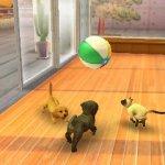 Скриншот Nintendogs + Cats – Изображение 3