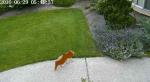 Инженер Nvidia борется с котами при помощи нейросети и поливалок. - Изображение 3