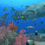 Скриншот Endless Ocean: Blue World – Изображение 6