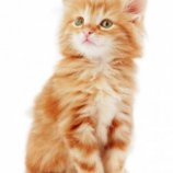 Скриншот SlidePuzzle - Baby Kitten – Изображение 3
