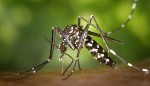 Они сделали это! Alphabet уничтожит комаров-переносчиков Зика-вируса