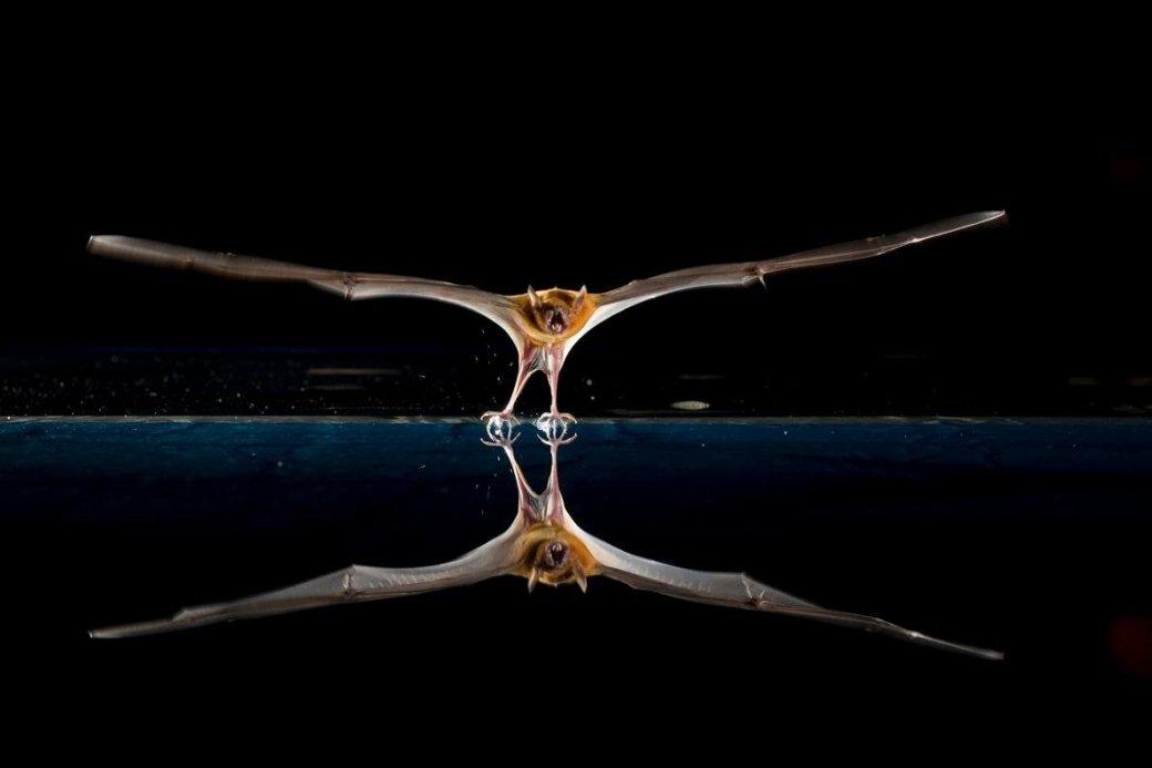 Хэллоуин еще некончился: лучшие фотографии летучих мышей отNatGeo - Изображение 1