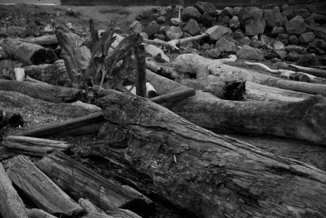 Тур по Сиэтлу – городу ветров, дождей и чаек   Канобу - Изображение 22